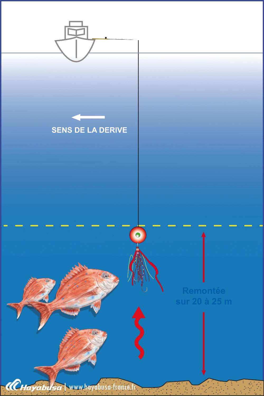 récupération linéaire s'effectue sur 20/25m pour les poissons benthiques