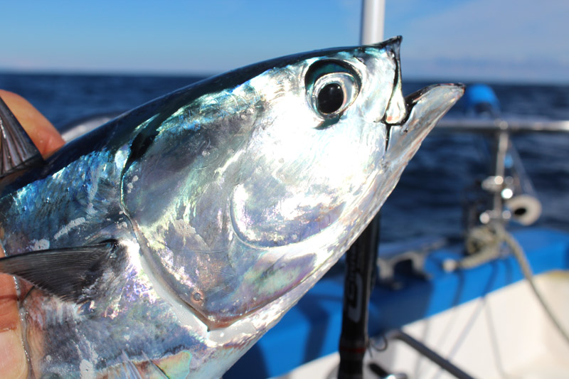pêcher ultra light au casting jig hayabusa