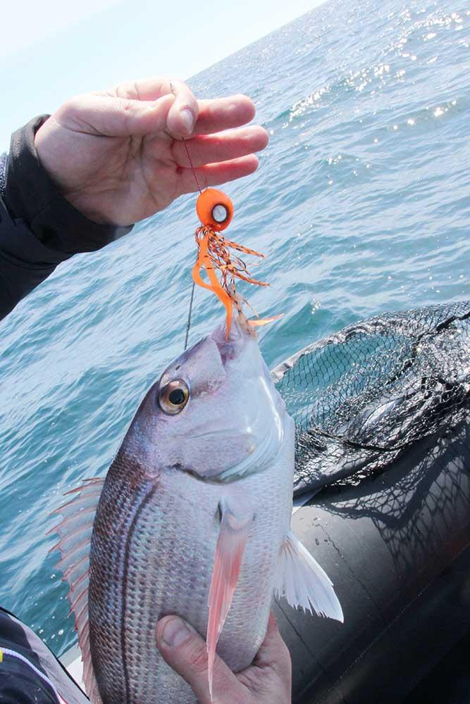 attache agrafe pêche prise pagre hayabusa